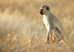 Brainstorm: What Humans Can Learn From Monkeys